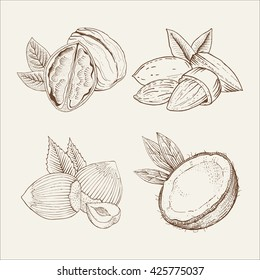 Coconut, almond, walnut. Vector set of nuts isolated on white background. Hand-drawn a sketch in woodcut style. Contour drawing with hatching. Organic food illustration.