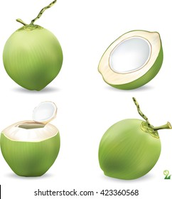 coconut and haft slice coconut vector design