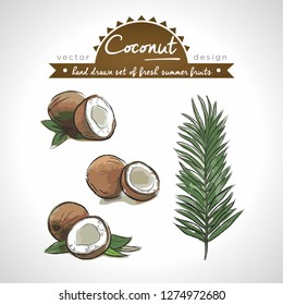 Coconut. Hand drawn collection of vector sketch detailed fresh fruits. Isolated