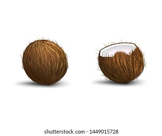 Coconut isolated on white background with shadow, whole coconut and half, realistic vector illustration
