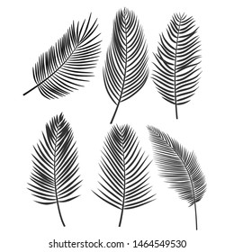 coconut leaf silhouette or Set of palm leaves. Black silhouette of tropical plants. vector