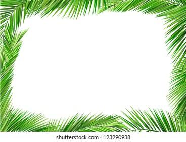 coconut leaves frame