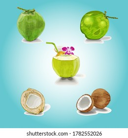 Coconut on color background. Vector illustration, Coconut icon set