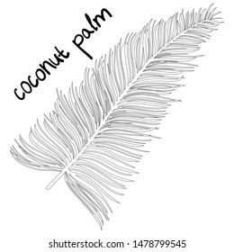 Coconut palm leaf. Black plant isolated on white. Flat design. Vector EPS10