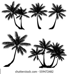 Coconut palm tree (Cocos nucifera). Set of hand drawn vector silhouettes on white background.