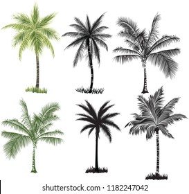 Coconut palm trees  set on white