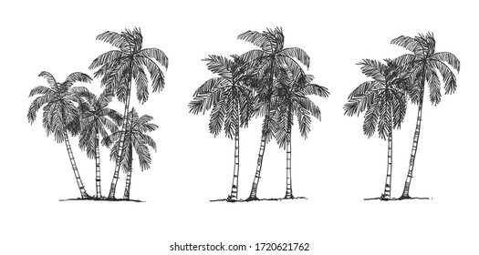 Coconut Tree Side view, set of graphics elements , Sketch tree Drawing shapes isolated on white background