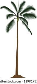 coconut tree vecktor illustration