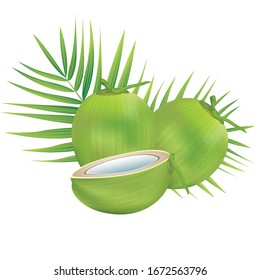 Coconut water drink in 3d illustration vector EPS 10. Green Coconut  on white background. For use in graphic design, posters.