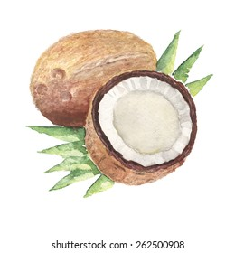 the coconut watercolor vegetable vitamin isolated on the white background