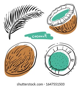 Coconut. Whole, half, leaf.  Colorful sketch collection of tropical fruits isolated on white background. Doodle hand drawn fruit icons. Vector illustration
