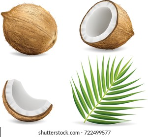 Coconuts isolated on white background.illustration