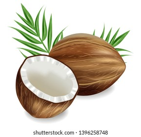 Coconuts Vector realistic. template tropic exotic background. detailed 3d illustration