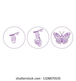 cocoon and butterfly vector drawing