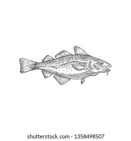 Cod or Codfish Hand Drawn Vector Illustration. Abstract Fish Sketch. Engraving Style Drawing. Isolated.