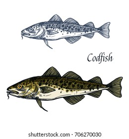 Cod fish vector sketch icon. Isolated sea or ocean codfish pollock or haddock species of marine fauna animal symbol for zoology, seafood or fish food restaurant, fishing club or fishery market