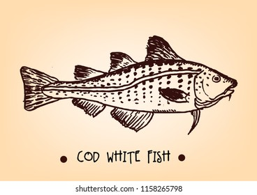 Cod White Fish Drawing Sketch