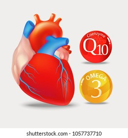 Coenzyme q10 and Omega 3. Heart. Normalization of cardiac activity. Basics of a healthy lifestyle.