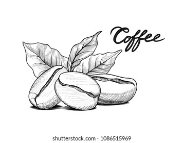 Coffee beans with leaves. Drink coffee sketch label. Food doodle background