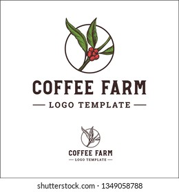 Coffee Beans, Coffee Plant, Logo Template Best for Coffee Farmer or Coffee Shop
