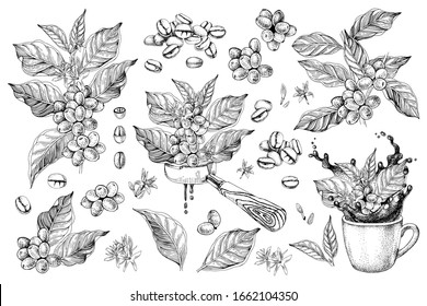 Coffee designs set with branches, beans, portafilter and cup with splash. Vector illustration in retro style