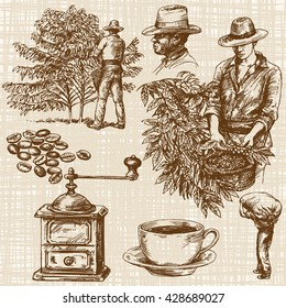 Kaffeebauern, die rote Kaffeebohnen auf dem Kaffeebaum pflücken.