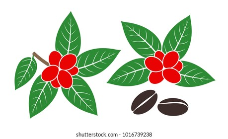 Coffee plant. Isolated coffee on white background. EPS 10. Vector illustration