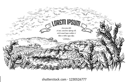 coffee plantation landscape in graphic style hand-drawn vector illustration.
