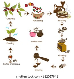 coffee processing step by step from bean to coffee lover