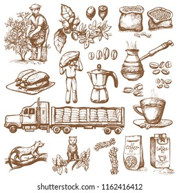 Coffee production vector plantation farmer picking coffeine beans on tree and vintage drawing drink retro cafe collection sketch coffeebean dessert illustration.