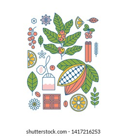 Coffee and tea plants and elements collection. Cocoa  coffee  matcha. Flat graphic. Vector illustration