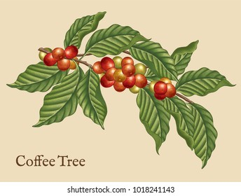 Coffee tree elements, retro plants in etching shading style with color