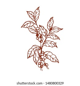 Coffee tree is hand draws in vector.