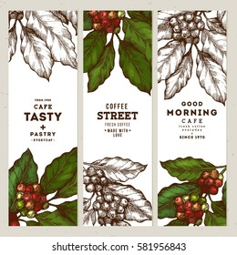 Coffee tree illustration. Engraved style illustration. Vintage coffee banner collection. Vector illustration