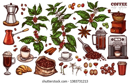 Coffee vector sketch set. Hand drawn colorful isolated illustration of coffee tree branches and plants with different objects and elements