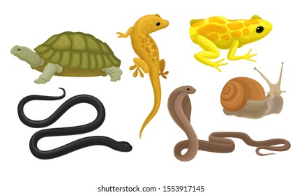 Cold-blooded Animals, Amphibians And Reptiles, Snakes, Snail Vector Illustration Set Isolated On White Background