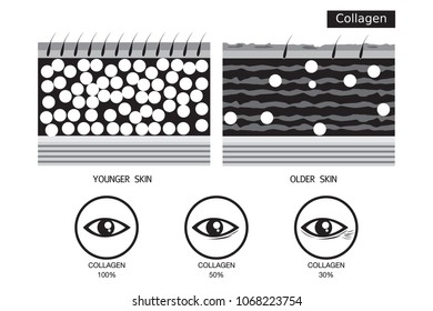 Collagen ,Protection Skin vector