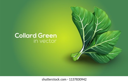 Collard Greens in Vector