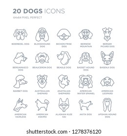 Collection of 20 dogs linear icons such as Boerboel dog, Bloodhound Alaskan Klee Kai American Eskimo Dog dog line icons with thin line stroke, vector illustration of trendy icon set.