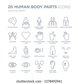 Collection of 20 Human Body Parts linear icons such as Brain, body with x ray plate focusing on stomach, Excretory system, Eye variant enlarged pupil line icons with thin line stroke, vector