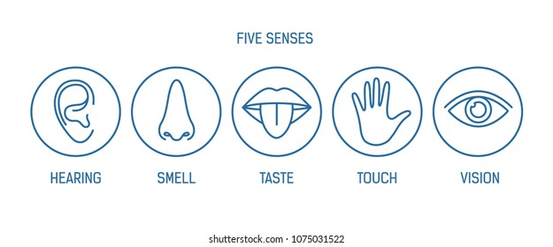 Collection of 5 senses - hearing, smell, taste, touch, vision. Bundle of human sensory organs drawn with contour lines inside round frames. Monochrome vector illustration in modern lineart style