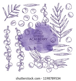 Collection of acai berries and acai palm. Super food. Vector hand drawn illustration.