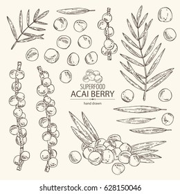 Collection of acai: berries and plant. Superfood. Hand drawn.