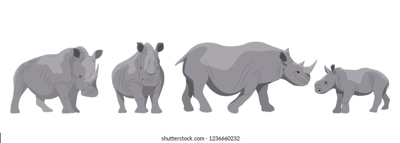 Collection of adult white and black african rhinos and their young. Realistic Vector Animals