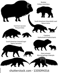 Collection of animals with cubs living in the territory of North and South America, in silhouettes: muskox, common raccoon, south american tapir, giant anteater, capybara, south american coati