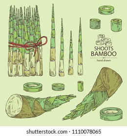 Collection of bamboo shoots: young bamboo shoot and piece of shoot. Vector hand drawn illustration.