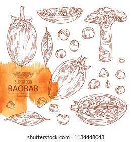Collection of baobab: baobab fruit, seeds, tree and leaves. Super food. Vector hand drawn illustration