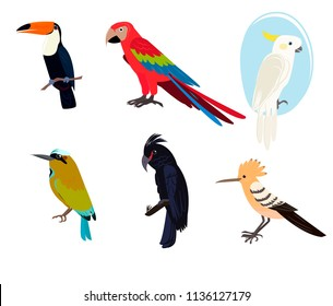 A collection of beautiful exotic bird