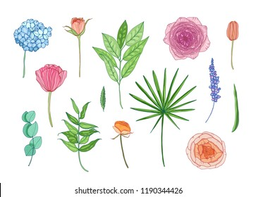 Collection of beautiful garden flowers and leaves - hortensia, ranunculus, rose, lavender, eucalyptus. Set of decorative floral elements isolated on white background. Colorful vector illustration.