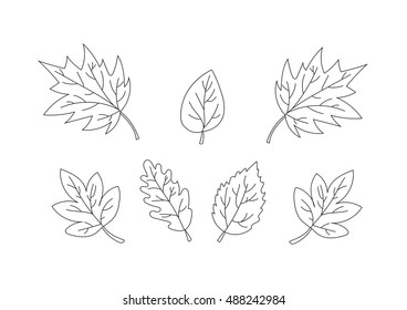 collection of beautiful leaves. Only line. vector